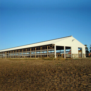 Steel Building Dairy Farm Large Prefab Mi 1